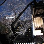 グランドプリンスホテル高輪 ステーキハウス桂で夜桜