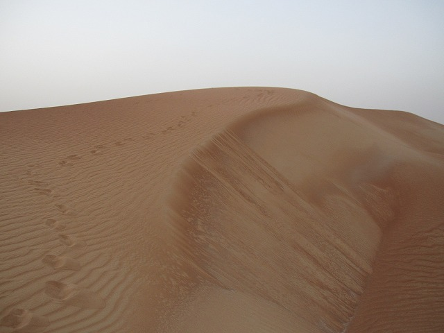 al-maha-resort-camel-003