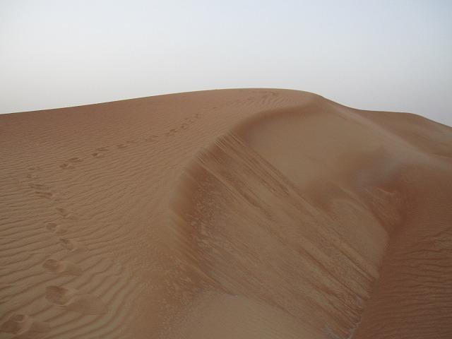 al-maha-resort-camel-003