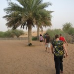al-maha-resort-camel-004
