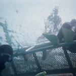 allamanda-lagoon-suite-diving-022