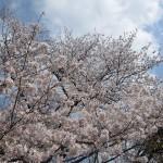 東京プリンスホテル 和食 清水 花見