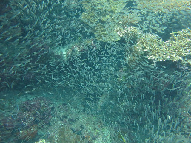 huvafen-fushi-diving-021