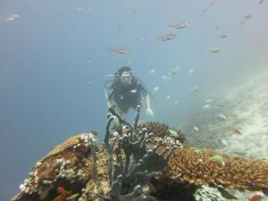 huvafen-fushi-diving-023