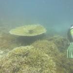 huvafen-fushi-diving-025