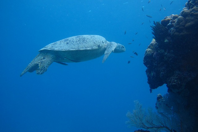 amanpulo-diving-001