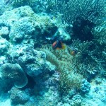 amanpulo-diving-015