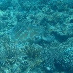 amanpulo-diving-018