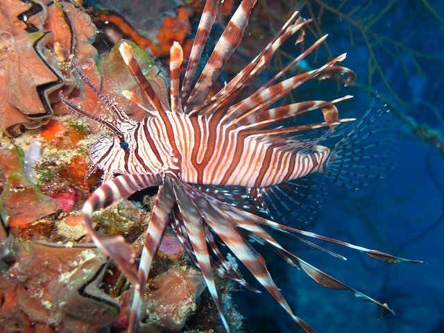 amanpulo-diving-019