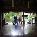 フォーシーズンズ テント キャンプ ゴールデン・トライアングル 象と食事を
